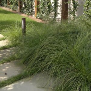 giardini-graminacee