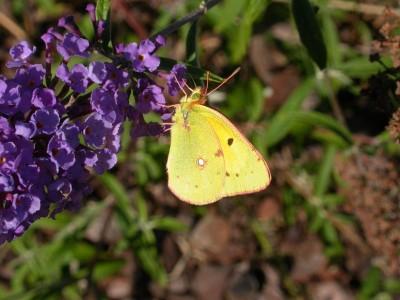Dettaglio dell' Alebro delle farfalle